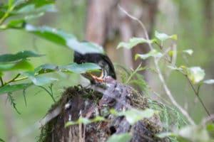 stewart island robin, sails tours