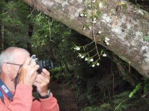 Orchids, Sails Ulva Island Tour, Stewart Island