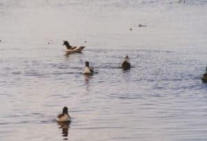 Cape Pigeon, Sails Tours, Stewart Island
