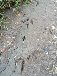Kiwi Claw prints, sails ulva island tours