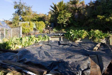 July Garden Chores at Sails Ashore