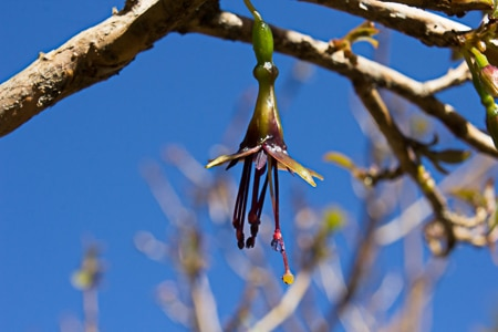 Fuchsia Bllom, Sails Ulva Island Tours