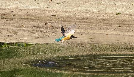 Kingfisher, Sails Stewart Island Tours