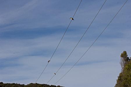 Kingfishers at Mill Creek, Sails Stewart Island Tours