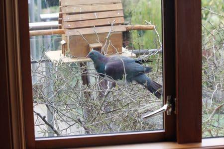 Pigeon Lunch, Sails Ashore, Stewart Island