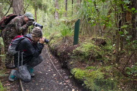 Stewart Island Hiking Trails