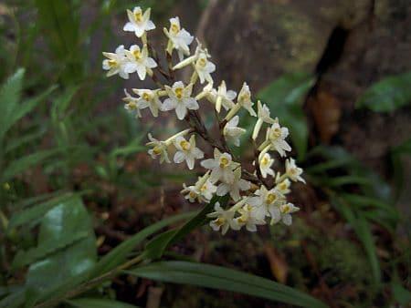 Autumn Orchid, Sails Stewart Island Tours