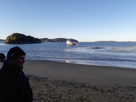 Flightless in Sydney Cove
